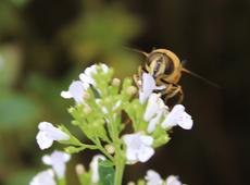 Bij bloem N-VA Arendonk